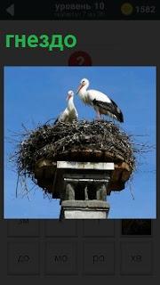 На самом верху колоны птицы свили свое гнездо и кормят птенцов кормом который принесли