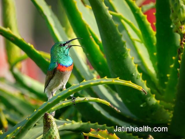 एलोवेरा के 7 जबरदस्त फायदे aloe vera benefits in hindi