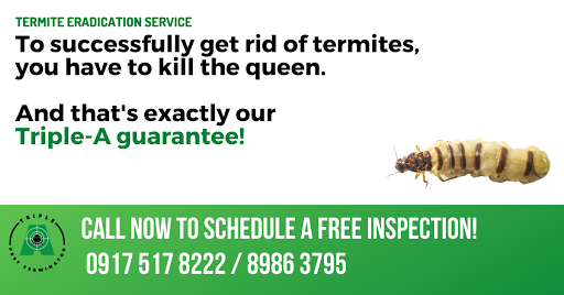 termite control baiting vs spraying and dusting