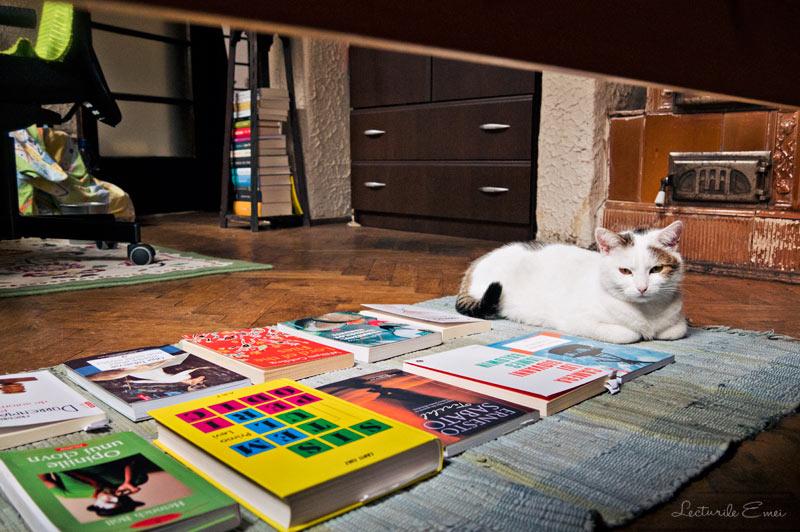cărți Bbibliobibuli și o pisică