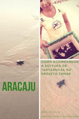 Soltura de tartarugas no Tamar Aracaju