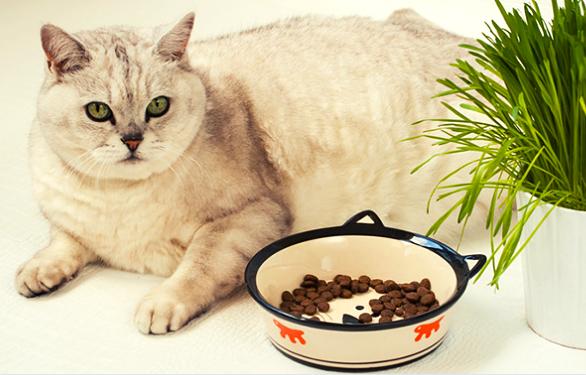 Pourquoi mon chat a-t-il toujours faim ? 5 raisons