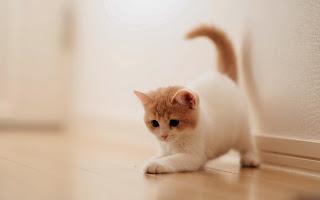 foto kucing terbaru