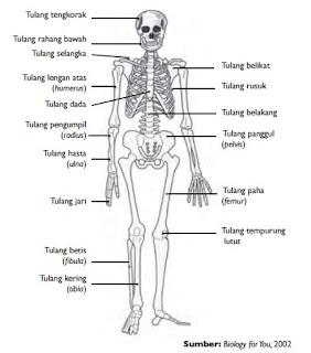 bentuk tulang penyusun tubuh