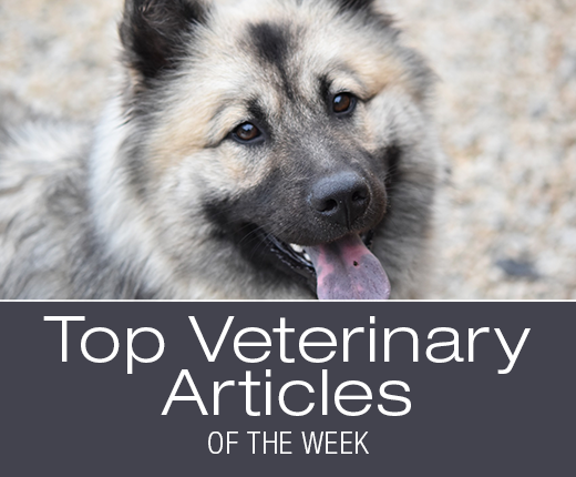 Top Veterinary Articles of the Week: Proper Administration of Thyroid Medication, Coxal Luxation, and more ...