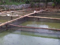 Gunakan Waring Ikan Untuk Membuat Kolam Keramba yang Berkualitas