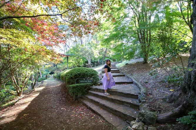 Laburnum Steps Breenhold Gardens Mount Wilson