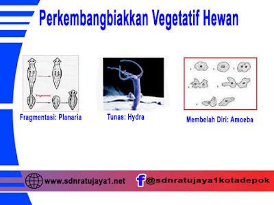 perkembangbiakkan vegetatif pada hewan