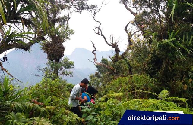 puncak termulus dukuh pangonan desa gunungsari kecamatan tlogowungu kabupaten pati jawa tengah