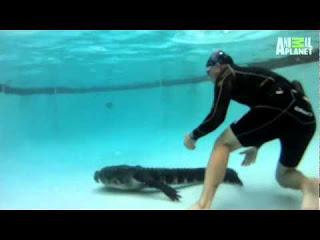 Pws-piaseis-aligatora-mesa-pisina