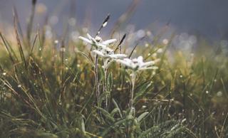 8 Tanaman Memesona di Gunung, Jangan Lupa Dilestarikan
