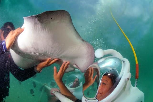 Sea TREK with stingrays