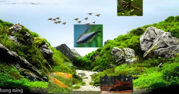 Cara Memilihan Ikan untuk Aquascape - Alam Ikan