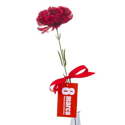 Czerwony goździk na Dzień Kobiet