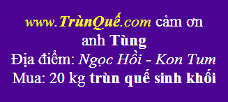 Trùn quế Kon Tum