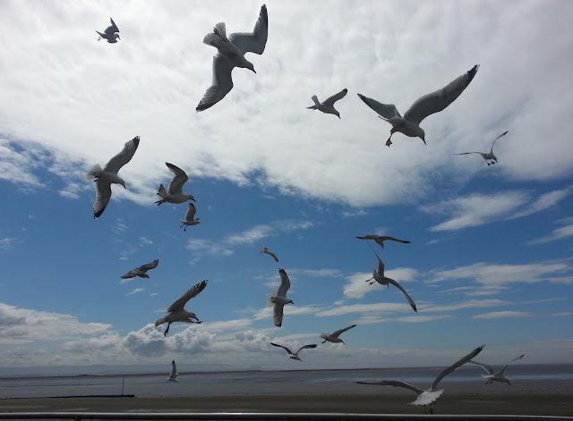 Seagulls Flying and Diving