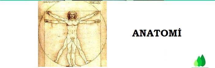 Anatomi Eklem Sutura tipi eklemler, eklemi oluşturan kemikler arasındaki diş şekillerine göre farklı adlar alırlar. anatomi eklem
