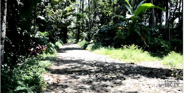 Lokasi Air Terjun Rengganis dan Kampung Wisata Durian Jember