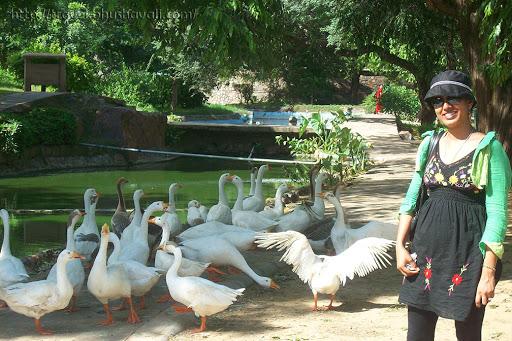 Buddha Jayanti Park, Delhi