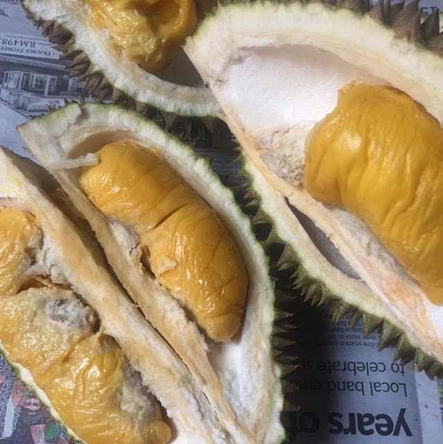 Durian Mantin Gemuk, Mantin Gemuk Durian, Durian Gemuk Mantin, Mantin Durian Gemuk