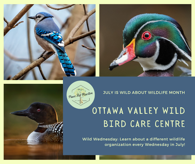 Wild Wednesday: Ottawa Valley Wild Bird Care Centre is the only rehabilitation centre exclusively dedicated to wild birds
