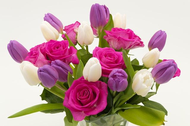 hoa tulip đỏ đẹp nhất 3