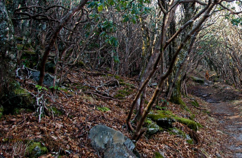 Natural Gardening Hike At Craggy Gardens