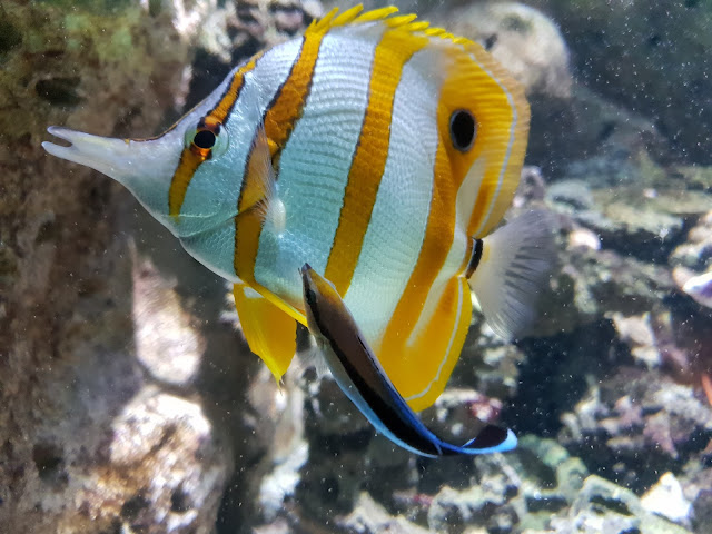 דג באקוואריום