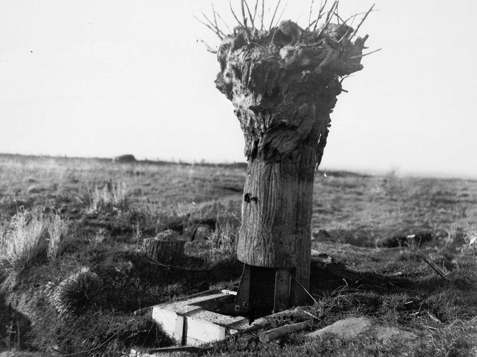 A British false tree, a type of disguised observation post used by both sides.