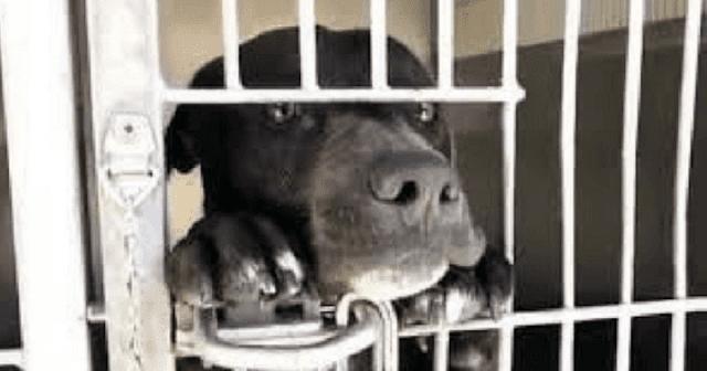 Стоя на задних лапках щенок умоляет забрать его из приюта