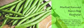olahan buncis, benih unggul, lebat 3, cap kapal terbang, manfaat buncis, jual benih buncis, toko pertanian, toko online, lmga agro