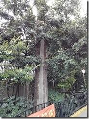 コンクリートで補強された木(2)