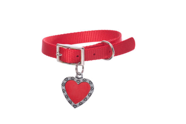 Custom Dog Tags – Looking for the Right Ones
