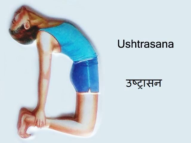 Ustrasana: Ustrasana in Hindi