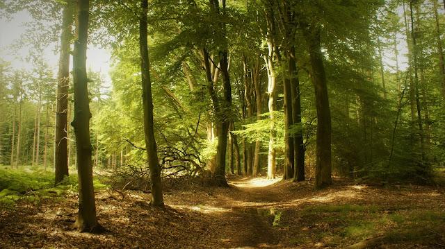 Inspirerende boswandeling