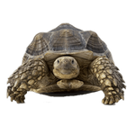 tortoise in spanish