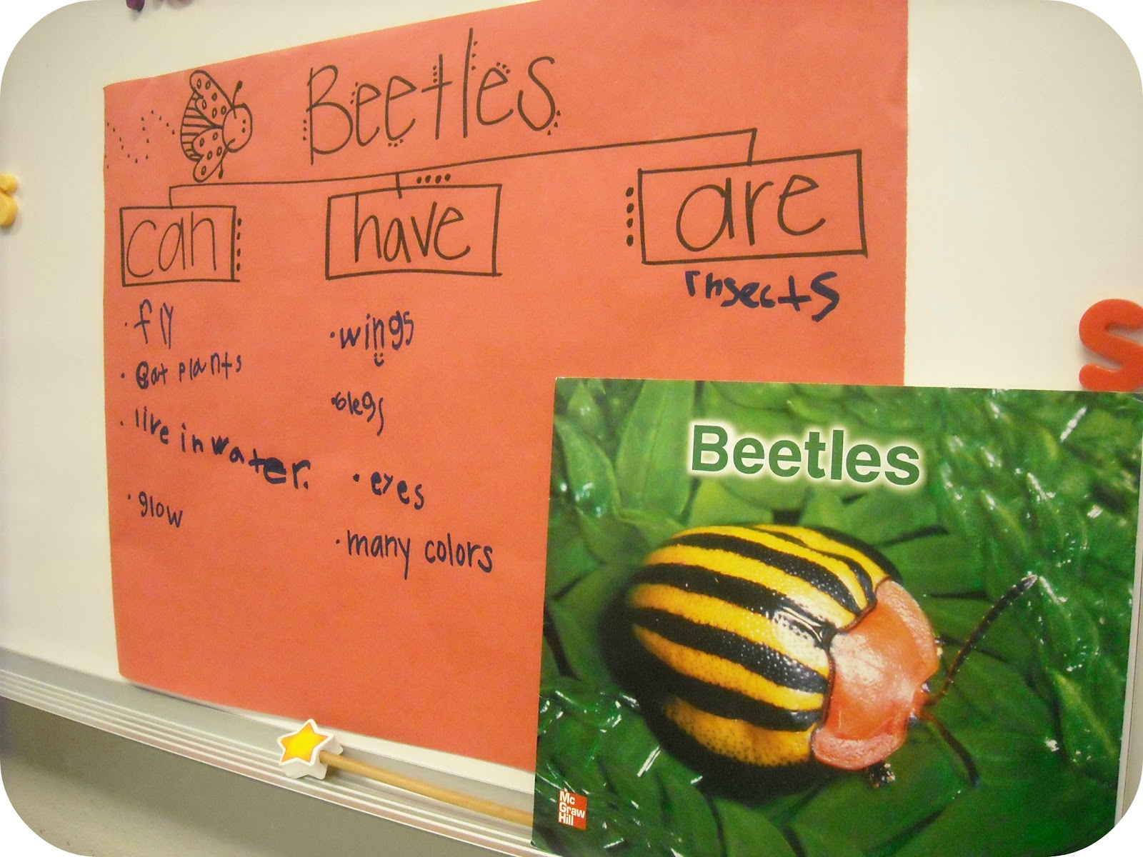 we finally finished our little ladybugs they turned out so cute we labeled their bug body parts and to bring in math we labeled the halves and whole  [ 1600 x 1200 Pixel ]