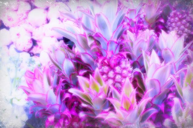 alice saga flowers