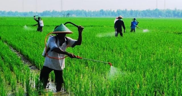Kumpulan Contoh Cerpen Petani dan Dunia Pertanian Lengkap
