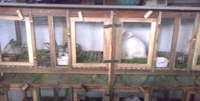 Pembuatan Lantai Kandang Kelinci
