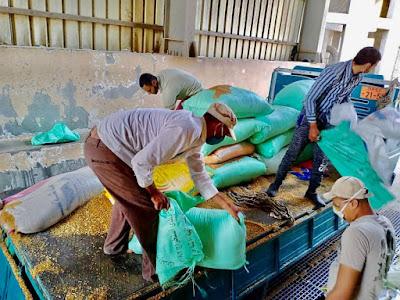 توريد 3324 طن قمح من المزارعين في كفرالشيخ