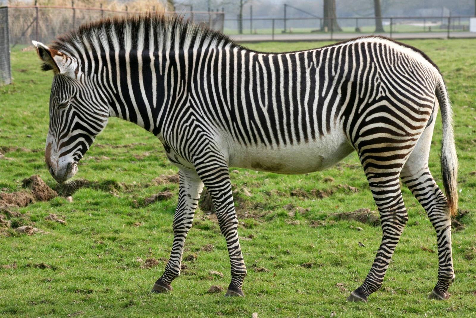 Top 10 Endangered Animals in the African Safari   Fun ...