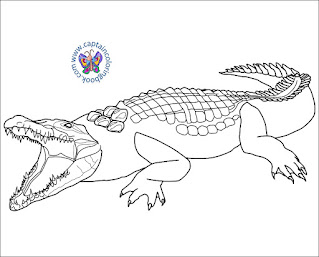 Alligator And Crocodile Coloring Pages PDF Download