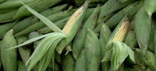 Preços da mão de milho verde e do coco seco variam até 200% nas feiras da Capital