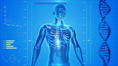Pengertian Sistem Muskuloskeletal Pada Anatomi Fisiologi Tubuh Manusia