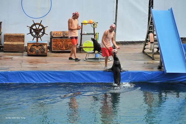 Thưởng thức show Hải Cẩu tại Sỏi Island (Hồ Cá Trí Nguyên)