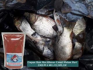 Umpan Ikan Mas Khusus Untuk Malam Hari