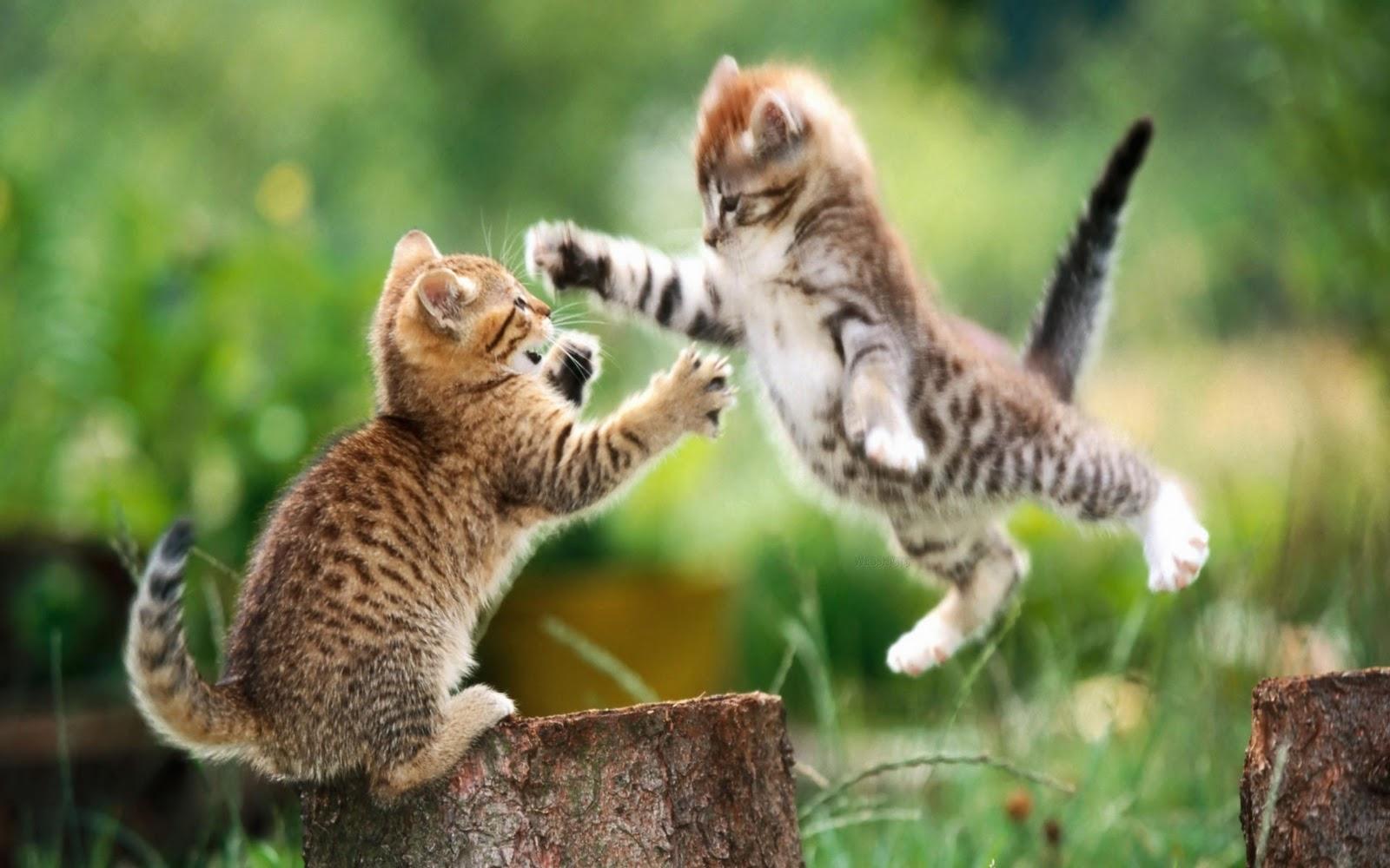 Cat Won T Eat Food But Will Eat Treats