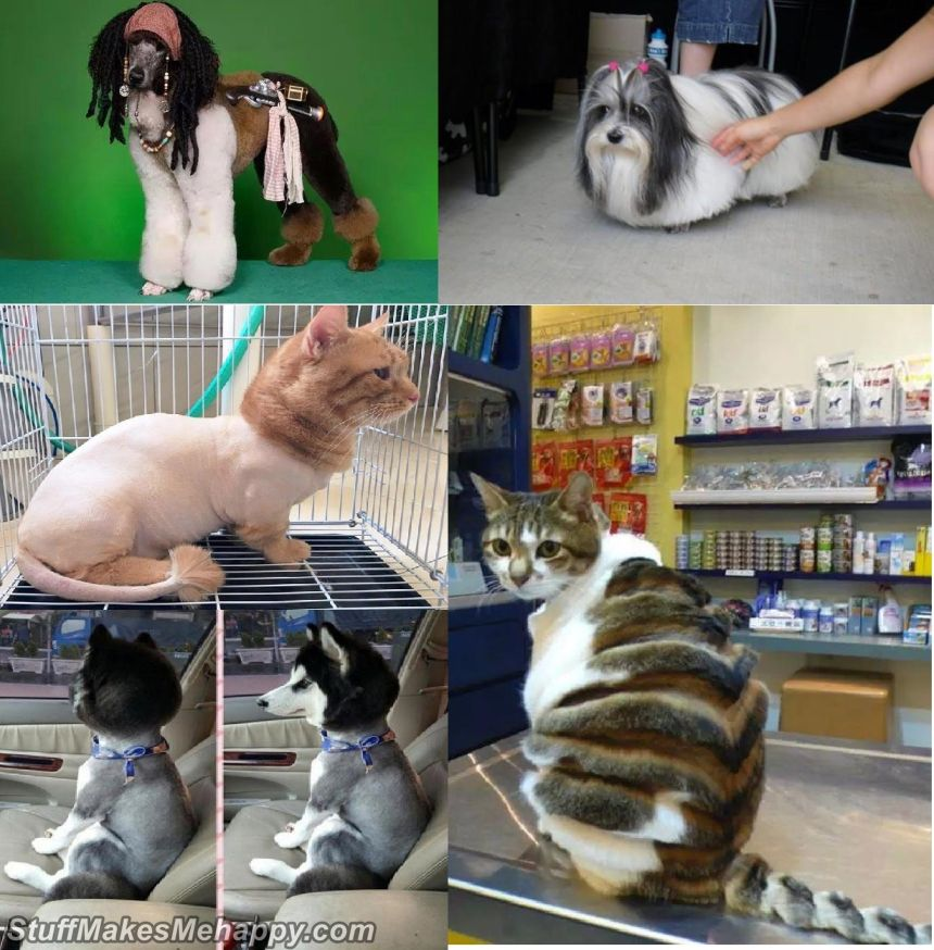 Best Pet Hairstyles Images - Pets After Going To The Hairdresser