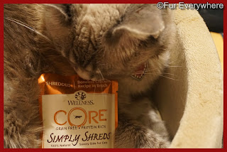 Lita checks out a Wellness CORE Boneless Chicken Grain-Free Wet Cat Food Topper.